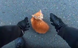 Мотоцикл против животных. Как избежать столкновения?